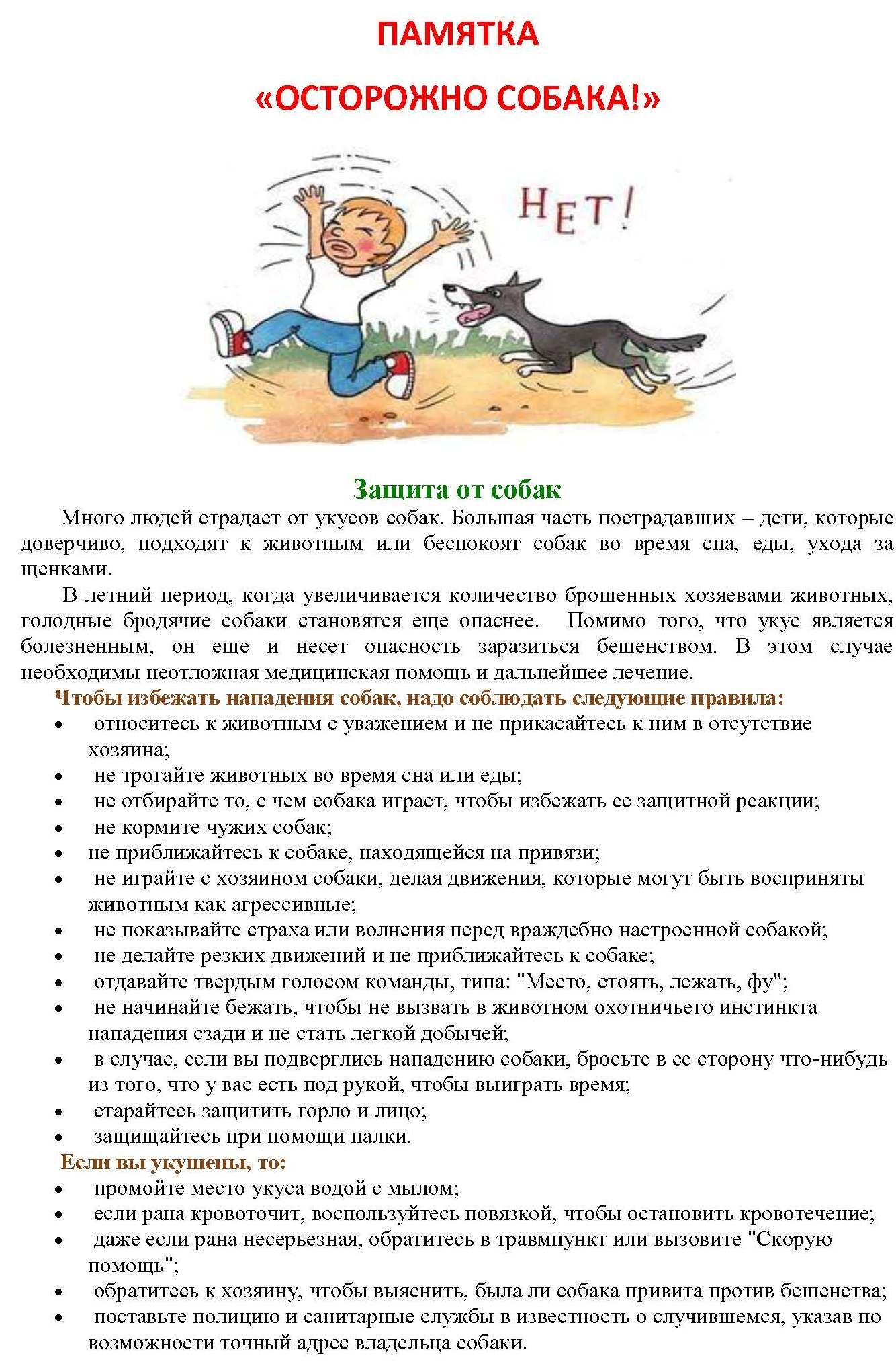 Памятка осторожно собаки